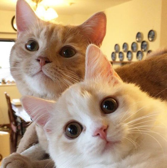 Selfie Toi Et Moi Cute Cats Pretty Cats Cute Animals