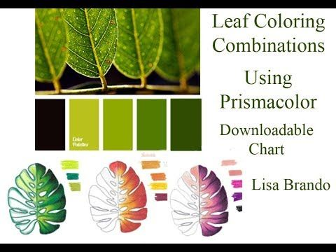 How To Color Leaves For Coloring Books Tutorial Leaf Color Combinations  Leaf Coloring, Gardens Coloring Book, Color Pencil Drawing