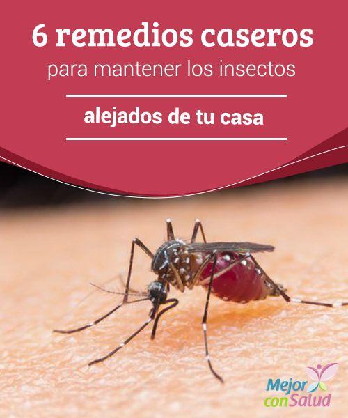 6 remedios caseros para mantener los insectos alejados de tu casa por m s h bitos de limpieza - Como ahuyentar mosquitos ...