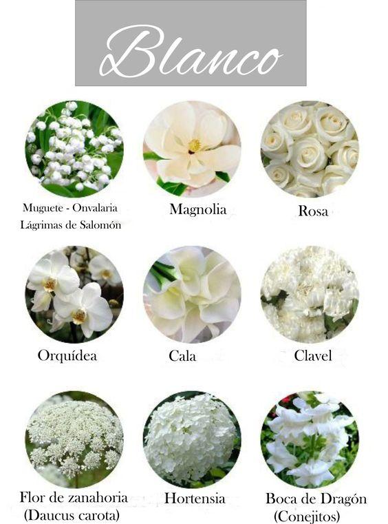 Flores de color blanco. White flowers.