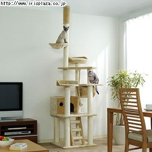 "Catland Floor to Ceiling Cat Tree w/Hiding Box, Pedestals, Rope and Scratching Posts, QQ80071Size: 24""L x 24""W x 94.5"" - 102.4""H right now 20% off to #$119.99"