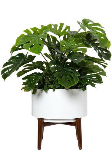 Buy Breeze Artificial Plant online   Shop EziBuy Home Come visit my website today at silkflowersandwreaths.com