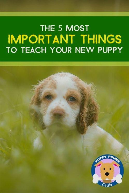 Dog Training Beds Dog Training Zone K9 Dog Training Akc Dog