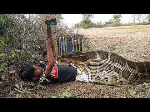 7 Biggest Snakes Ever Found Youtube Outdoor Wildlife Outdoor