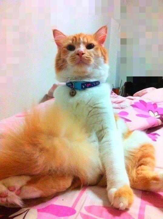 https://www.facebook.com/Lovelycatslife
