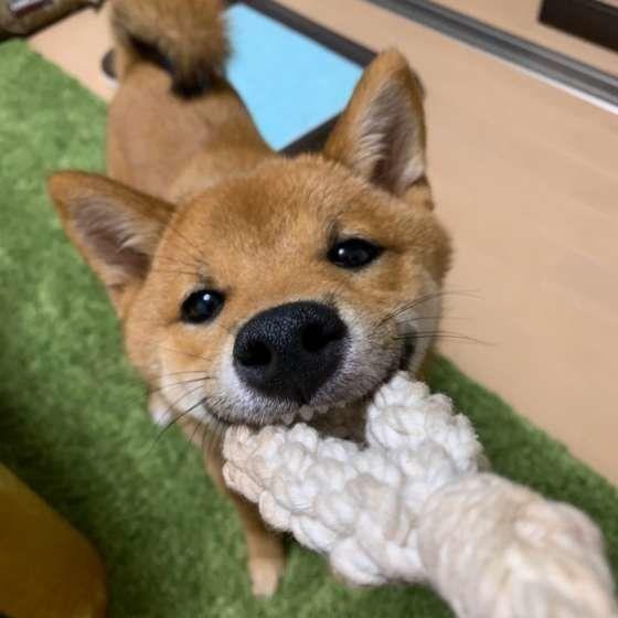 犬の飼い始めに多い 4つの勘違い え そうだったの いぬのきもちweb Magazine 犬 犬の気持ち いぬ