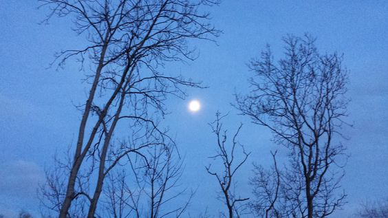 Riverside Moonlight