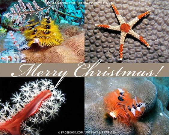 Unterwasserwelten · · · We wish everyone a merry christmas!