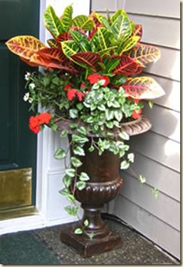The green thumbers thrillers fillers and spillers for Potted plants by front door