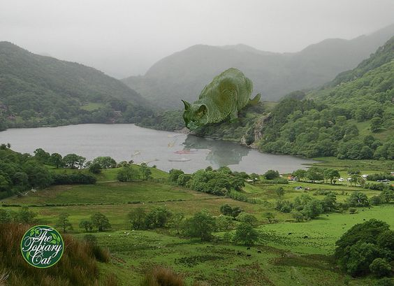 The Topiary Cat tempted by fish in a Welsh lake | par Rich Saunders