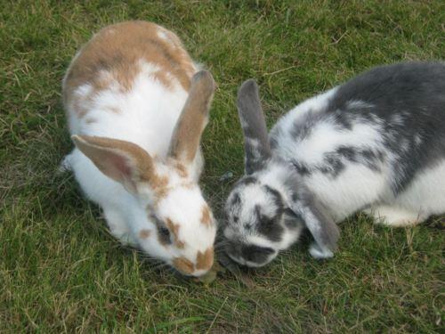 Conspirator Bunnies Conspire - October 24, 2011