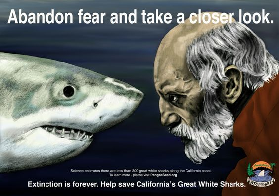 With your support we've just crossed the 1,000 signature mark - thank you! PangeaSeed West Coast needs your help to push for 1,000 more - please sign/share this call for action to protect California's Great White Shark.    With less than 300 of these magnificent apex predators left in the wild along California's coastline, the time to act is now!!!    Follow the link below and lend your support today!    http://www.thepetitionsite.com/678/750/763/save-california-coasts-great-white-shark/