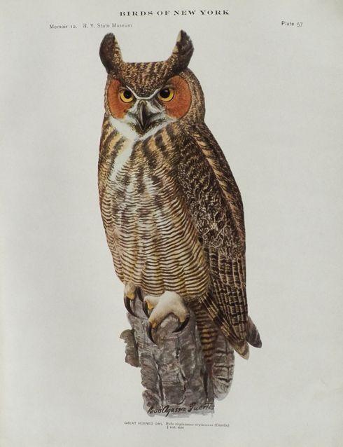 Public Domain Vintage Owl Image 5 Owl Images Owl Posters Owl Illustration