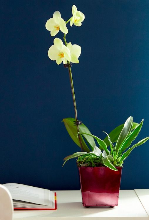 Learn the easy tricks for taking care of finicky orchids for Easy to take care of outdoor plants