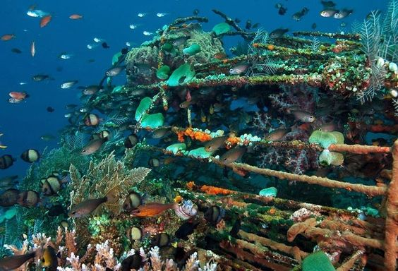 Artificial reef. 人工魚礁。