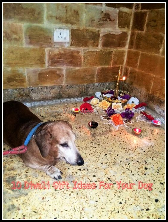 !0 Diwali Gift Ideas For Your Dog