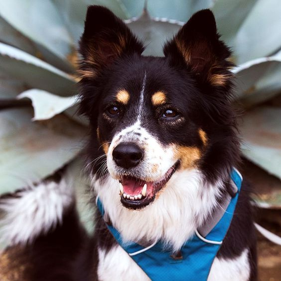 Join Us Today For Dogs Day In The Garden And Bring Out Your Four