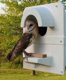 Owl Stuff: Owls Save Crops