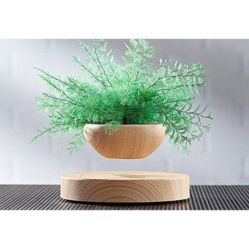 Amazon Com Levitating Air Bonsai Pot Magnetic Levitation Suspension Flower And Air Bonsai Pot Garden Outdoor Plants Unusual Plants Fern Plant