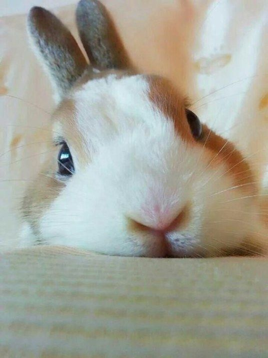 Elated Rabbit With Images Cute Animals Pets Cute Animal Pictures