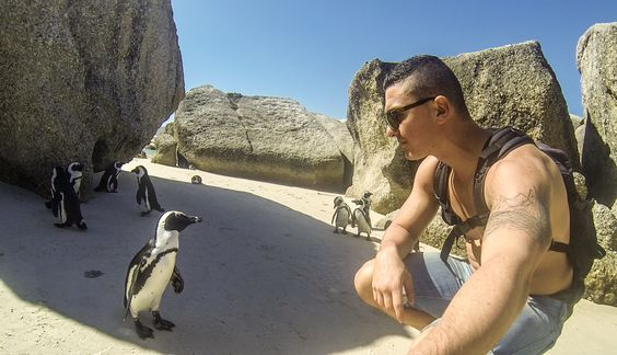 Blouders beach, penguins, cap town, simon town, Xtrips