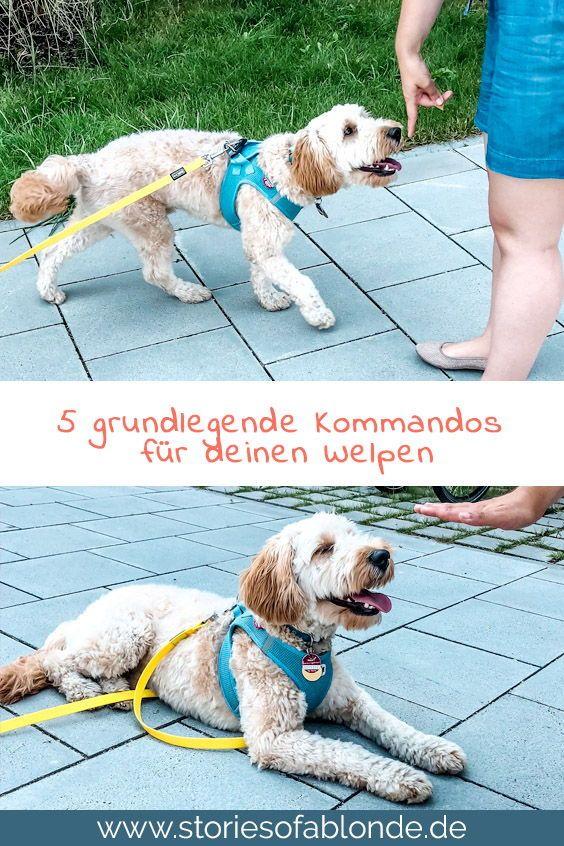 Die Ersten 5 Grundkommandos Fur Deinen Welpen Welpen Hunde Welpen Erziehung Hunde Erziehen