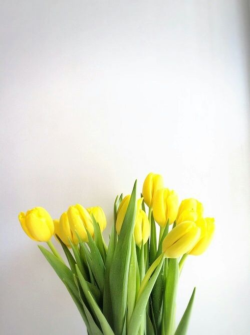 Yellow Tulips Available locally in April