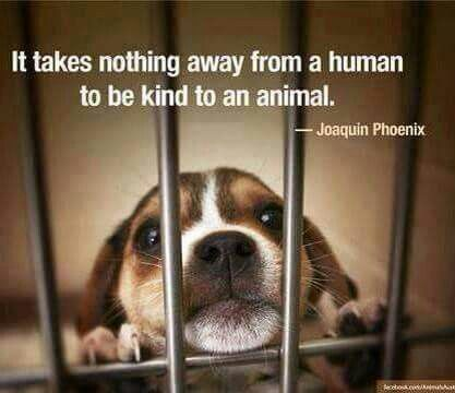 They all deserve to be loved unconditionally!: