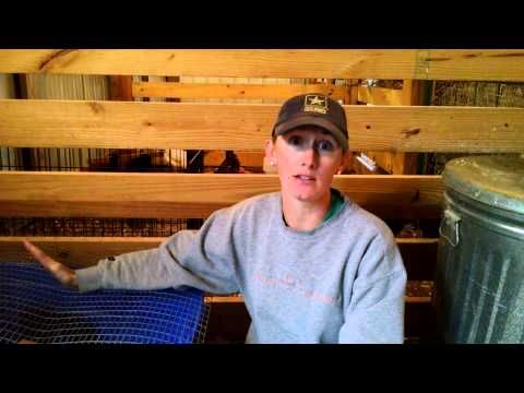 Chick Brooder 101 - YouTube