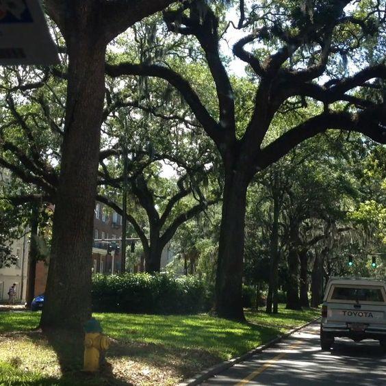 #drivingthrough #Savannah #Georgia #streets #SouthEastCoast #roadtrip #intrepidtraveler #instanature #vacationmode