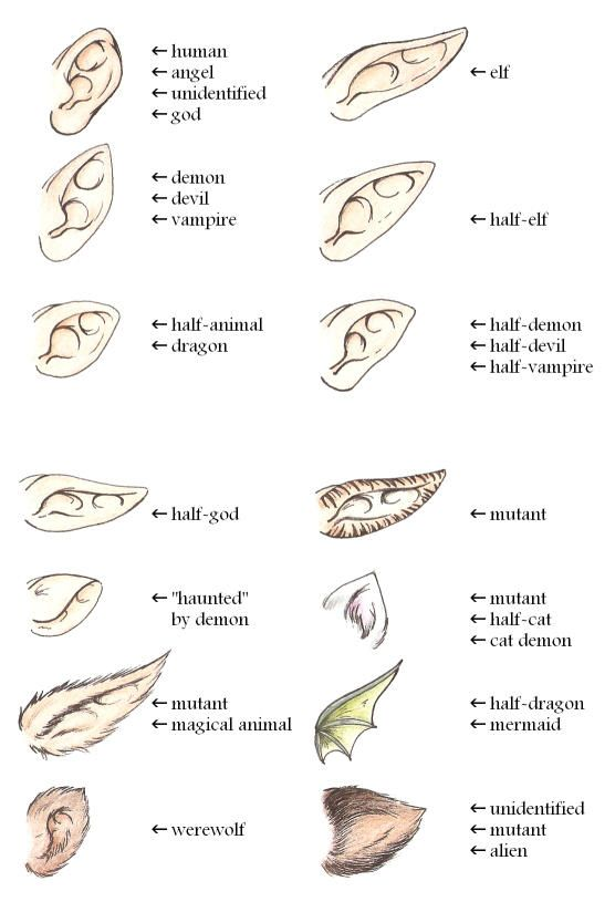 Ears Guide By Yume By Yumenegari Fantasy Drawings Art Reference Art Sketches
