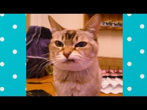 Funny Cats Reaction To Bad Smells Top Cats Video Compilation