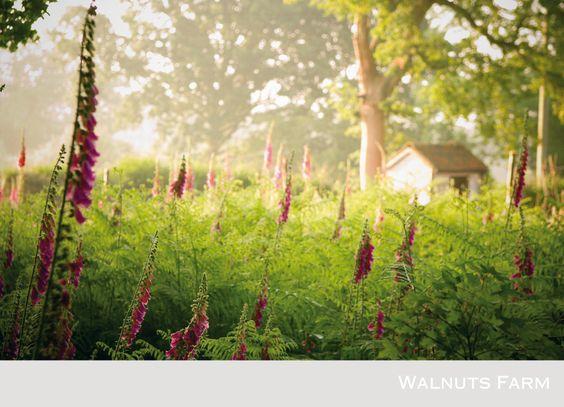Walnuts Farm – the rustic shoot location house | Woodland