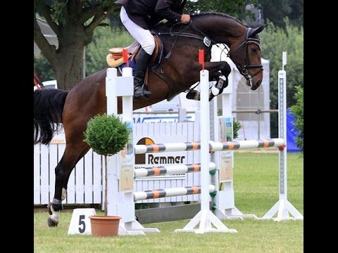 www.sporthorses-online.com 2012 Hanoverian jumping mare price range I