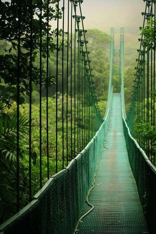 Puente colgante en la selva tropical del Parque Nacional de Mesa Verde, Costa Rica