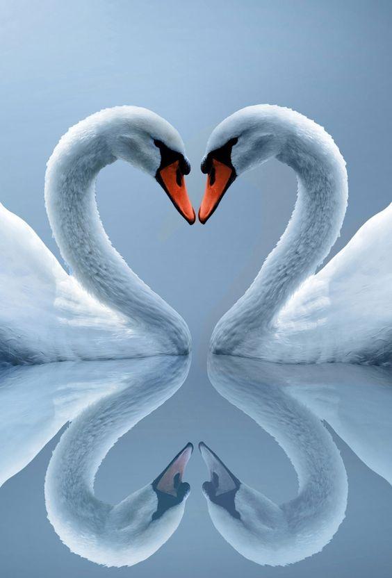 inseparables oiseaux Cb560babbd7d942810a21b0fca0ac497