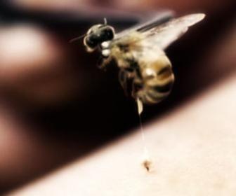 Veleno delle api (apipuntura)