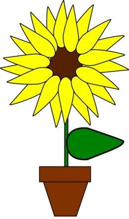 Paling Bagus 23 Gambar Animasi Bunga Keren Gambar Bunga Matahari