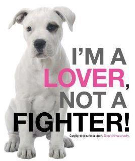 Pitbull lovers!!!