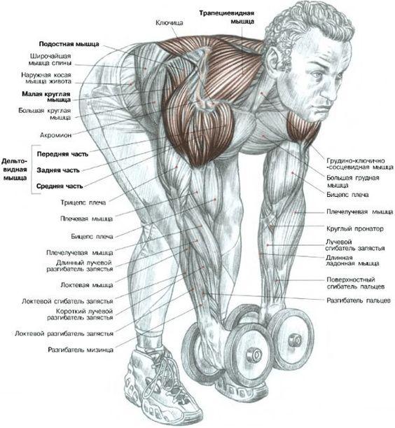 #фитнес #тренировки #самый_результативный_проект #BodyFit #Спортлайф #Витаспорт  Как тренировать задний пучок дельт?  Многие знатоки утверждают, что задняя часть плеча (дельты) хорошо работают в базовых упражнениях на спину, например:  Подтягивания Тяга штанги к поясу Тяга гантели в наклоне Тяга вертикального блока к груди  Так же они утверждают, что целенаправленно бомбить их нет нужды. И зря. Конечно же, базовые упражнения – это очень хорошо для больших крупных мышечных групп.  Но в нашем…