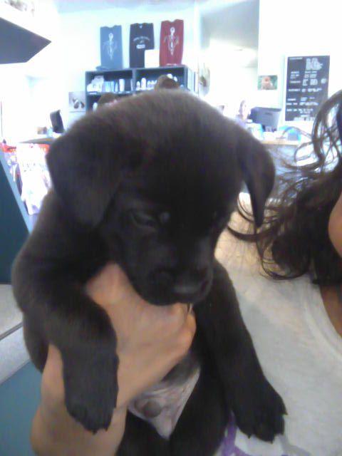Jackson puppy!!