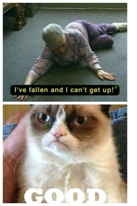 I've fallen and I can't get up | Grumpy cat | Pinterest | Cas and ...
