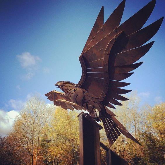 Red Kite hawk. Instagram photo by @gofannonforge
