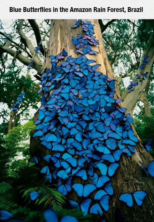 Butterflies In The Amazon - This (along with so many innumerable reasons) is why the rain forests are so important.  We are destroying so much of our world that we could lose things like this in our lifetime.  That's too fast for the Earth to compensate.