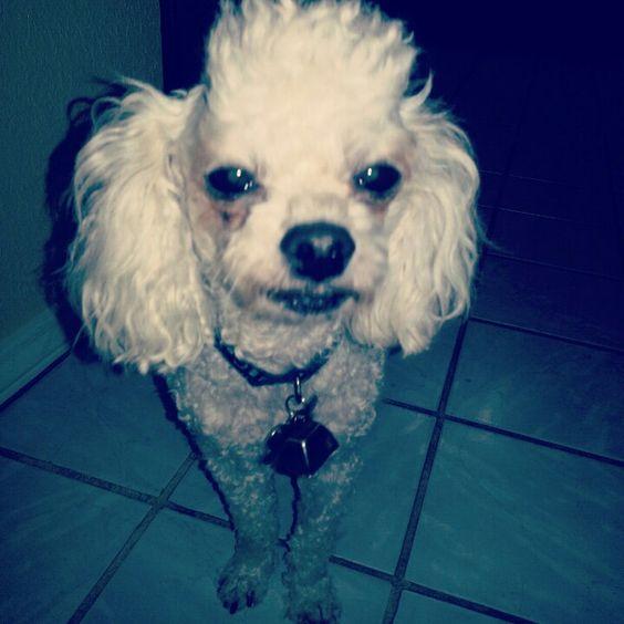 Unimpressed dog.