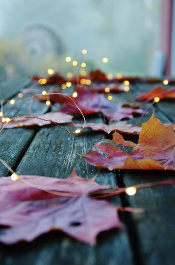 Autumn leaves and twinkle lights... I can't wait :)