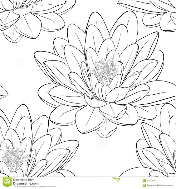 Flower outline, Lotus flowers and Lotus flower drawings on ...
