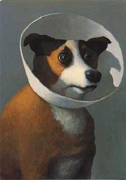 Michael Sowa print. Cone of shame on a cute puppy.