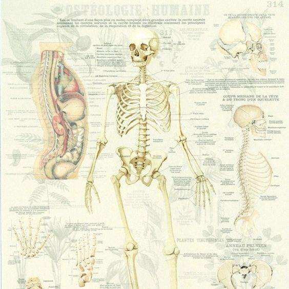 panneau squelette ost ologie humaine. Black Bedroom Furniture Sets. Home Design Ideas
