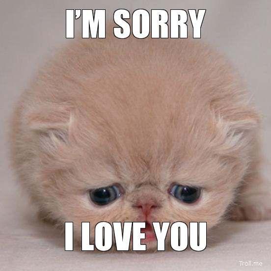 Image Gallery i am sad kitten
